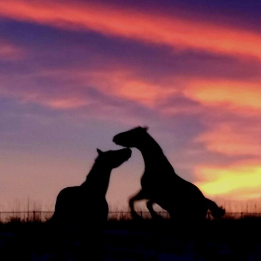 Blog image Horse Sunrise