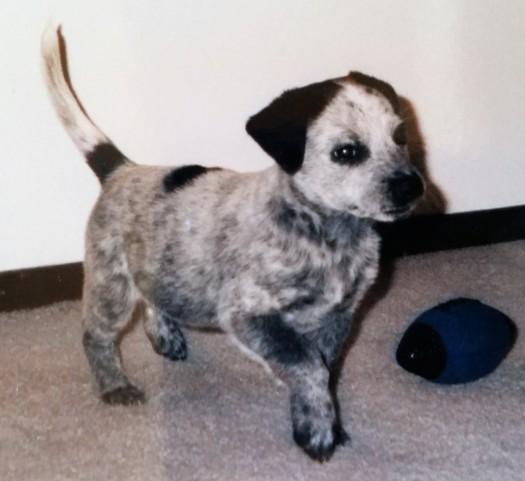 Baby Seattle Dog crop
