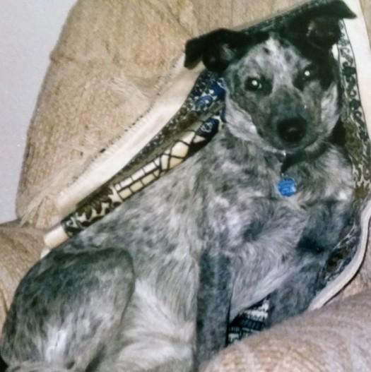 Seattle Dog