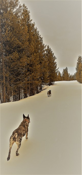 Blog Photo Dogs Snowy Road.jpg
